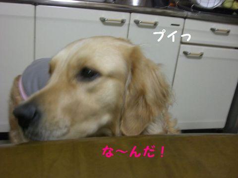 Photo_22