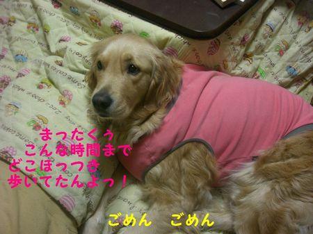 Photo_40